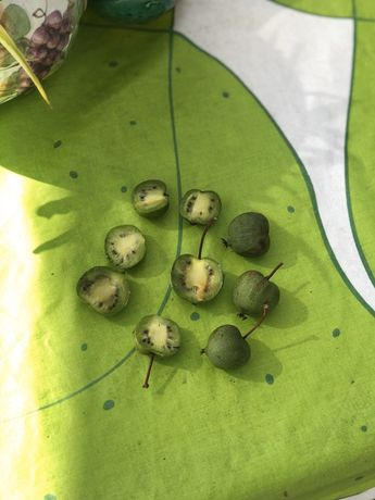 Planta Kiwi Bebé ou Arguta