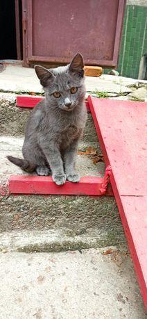 Очаровательный котенок с медными глазами и красивой шубкой