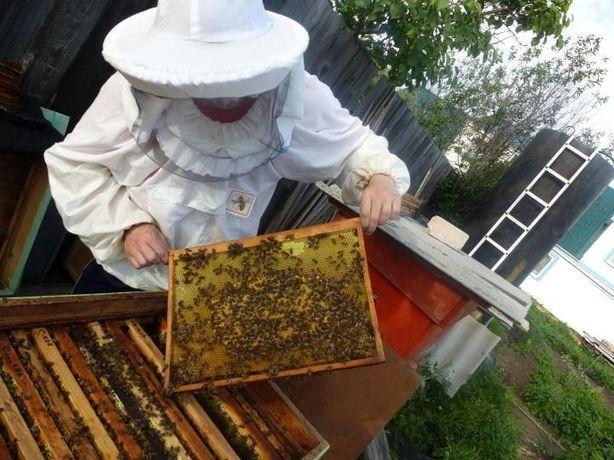 ПчелопакетыУкраїнська степова Доставка в Винница! 4 расплода