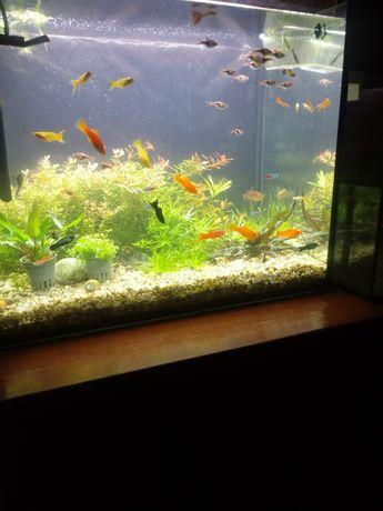Sprzedam lub zamienie rybki akwariowe