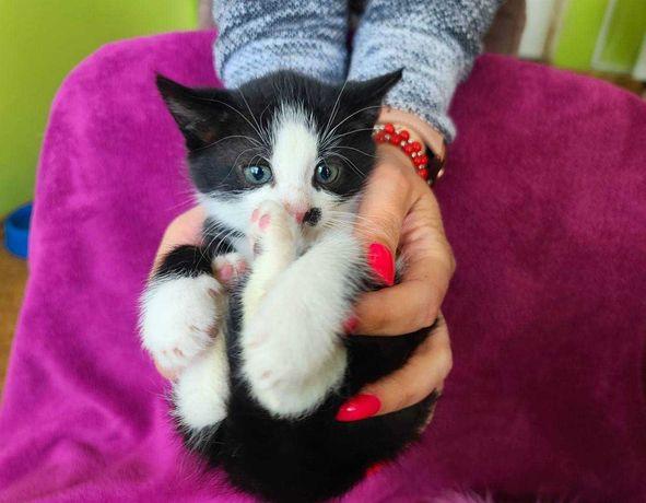 Кото-мальчик Сион в поиске семьи! Кот, котята , кошки