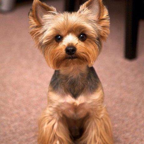 Стрижка собак , котов , подстригание когтей