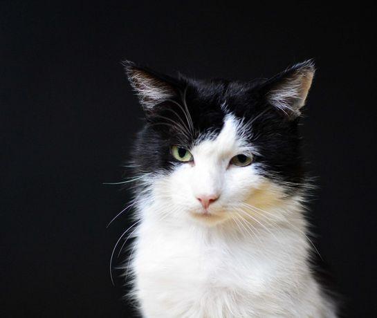 Kicior- Kot ZAKOCHANY w Czlowieku PILNIE potrzebuje Domu.