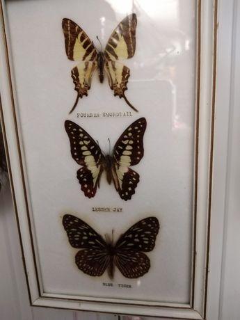 Бабочки насекомые картина подарок