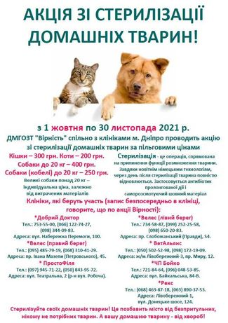 ДНЕПР! Акция по стерилизации домашних животных 2021! Доступные цены!