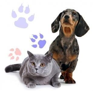 Вызов ветеринара на дом, ветеринарный врач, кастрация, стерилизация,