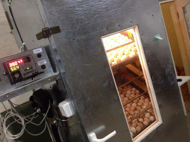 Инкубирование яиц. Услуга инкубатора