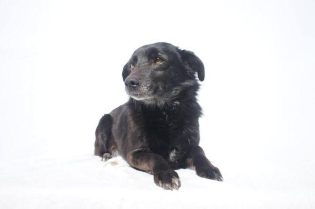 Mia - cadela porte médio esterilizada