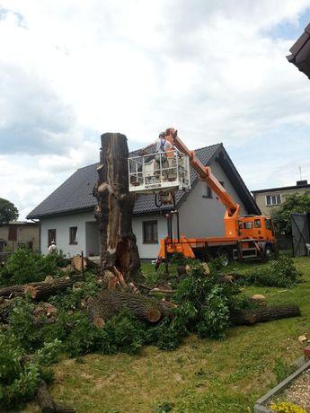 Wycinka drzew Lubartów-Frezowanie pni rozdrabnianie gałęzi