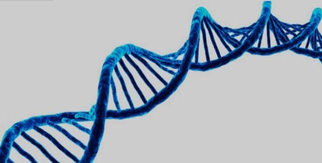 Korepetycje biologia egzaminator maturalny