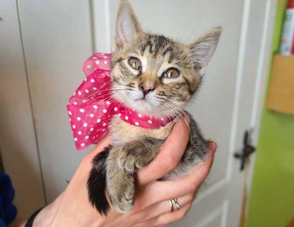 Крошка Сонька - счастье в дом, котенок, 2 мес., кошка кот