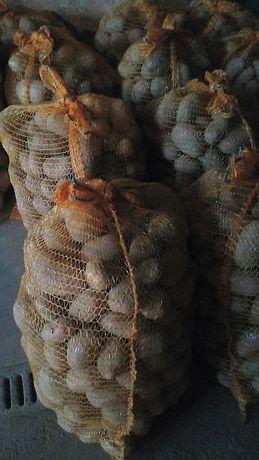 Ziemniaki odmiana Bella rosa