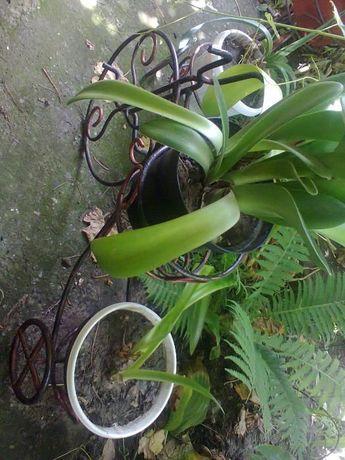 цветошник велосипед