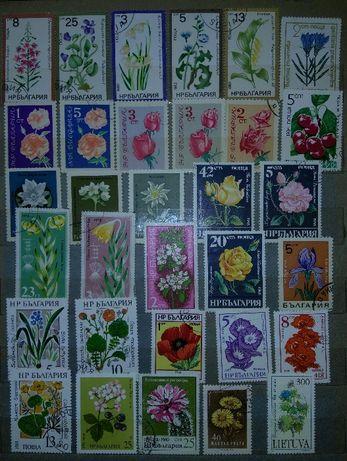 Почтовые марки: Цветы.
