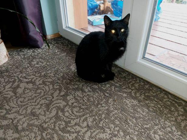 Oddamy niezwykłą czarną kotkę w dobre ręce, kot, kotek