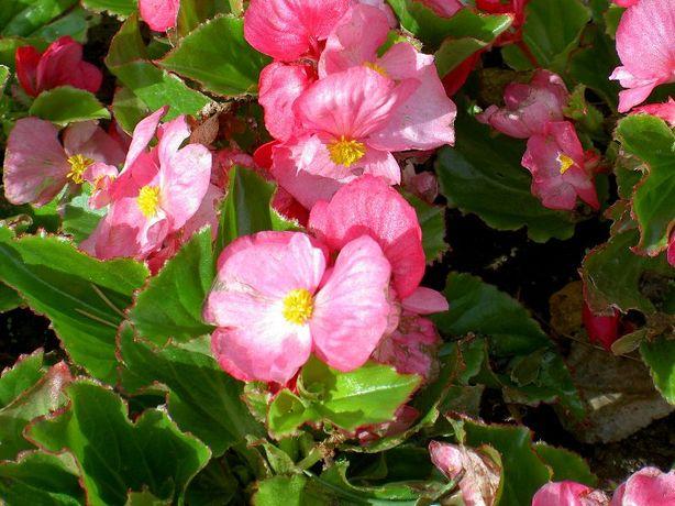 комнатные цветы-50рубл