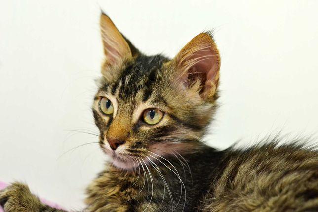 Джони - Ласковый котенок - 4 месяца