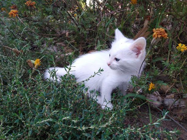 віддам кошенят у турботливі руки (# кошенята, # котята # котенок)
