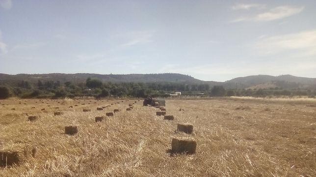 Fardos de palha de feno semeado