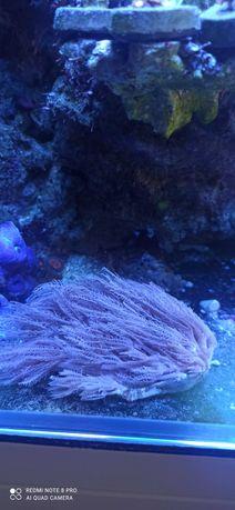 Korale morskie łatwe