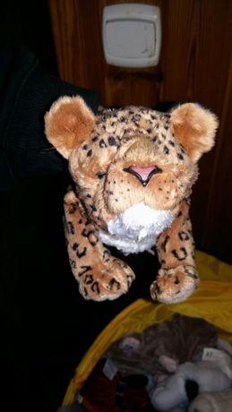 Intetaktywny tygrysek promocja