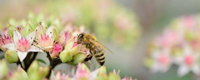 Voucher Podarunkowy! Kurs Pszczelarski dla Początkujących Edycja 2021!