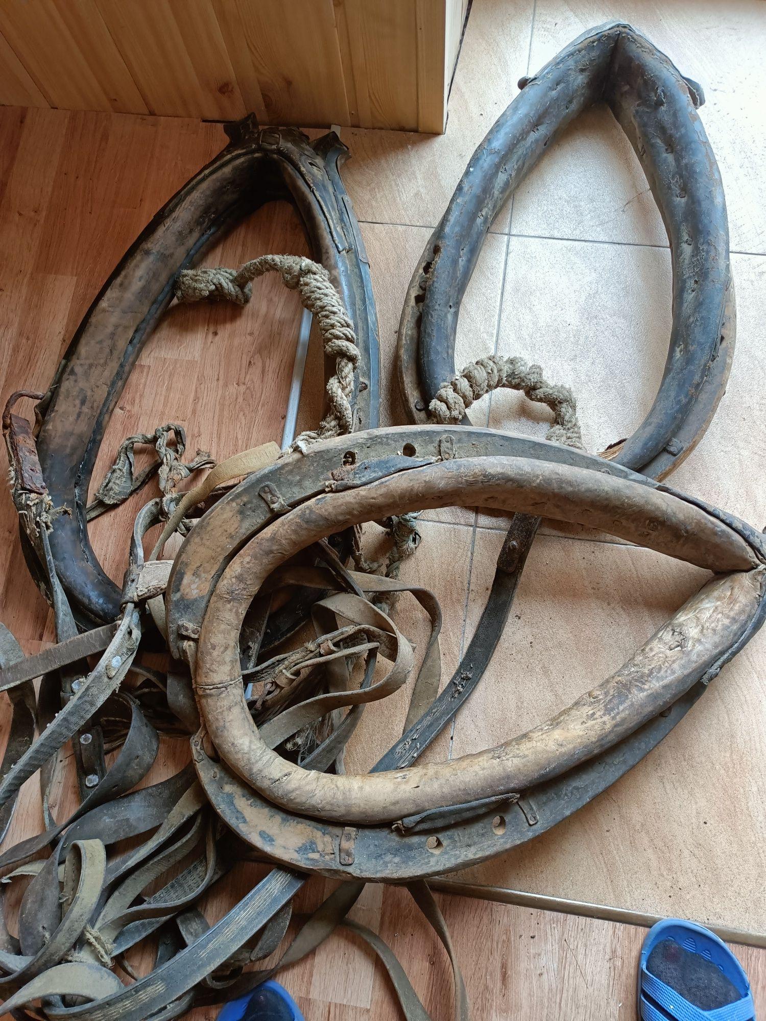 Stare chomonta dla konia