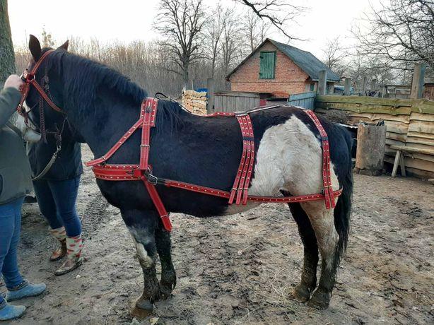 Упряж шлея нарытник півшора хома уздечка оголовье коня лошадь кантар