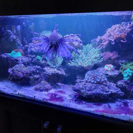 Akwarium morskie z szafką bez życia