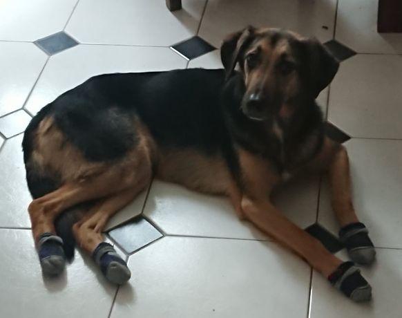 Adopcja pieska, kundelka 7 lat średni pies