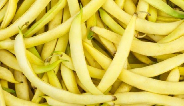 Fasola szparagowa, ogórek gruntowy
