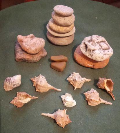 Ракушки мушлі каміння для акваріуму