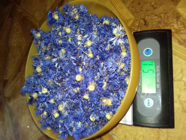 Kwiat chaber - bławatek suszony zdrowa herbatka