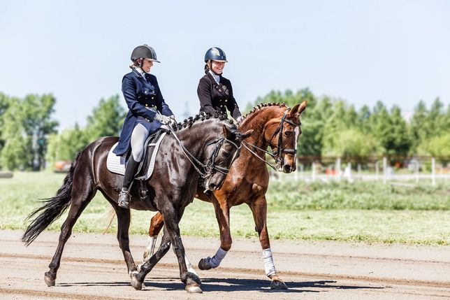 Верховая езда, обучение