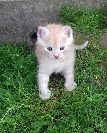 Віддам котика у добрі руки!