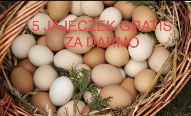 Jajka wiejskie (możliwy dowóz) 5 szt. GRATIS