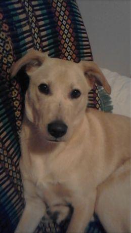 Rocky.. Dou o meu cão lindo, vacinado, e ensinado, com pena minha..