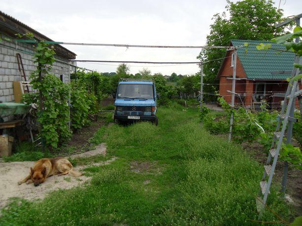 Продам участок с домом и виноградником