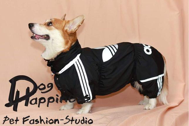 Пошив одежды для собак, по индивидуальным размерам.