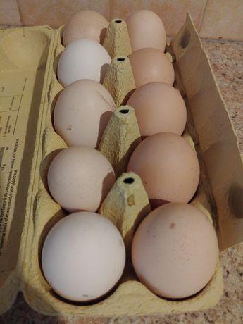 Jaja wiejskie EKO XL