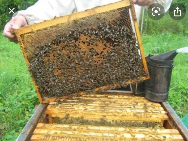 Бджолопакети 1200
