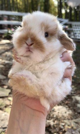Декоративні кролики. Кроленята