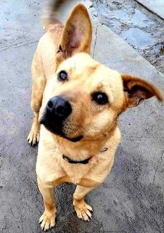Jery -uroczy pies szuka domu