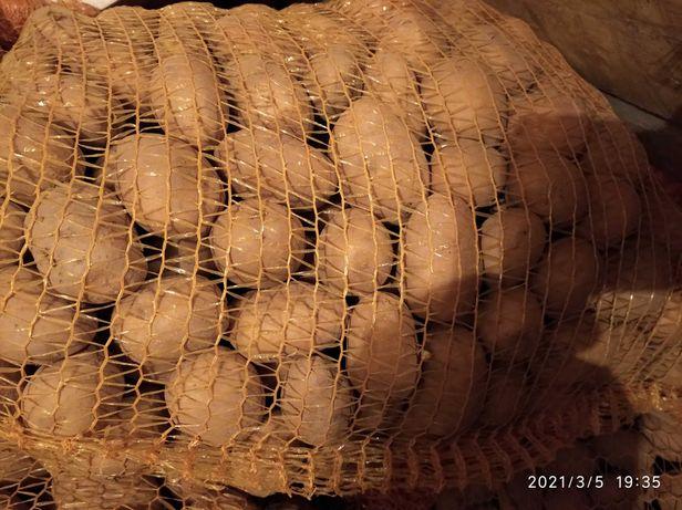 Ziemniaki sadzeniaki Natasza,Natasha