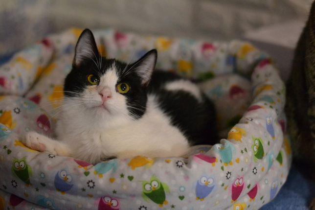 чорно-біла Лізочка кішечка 7м