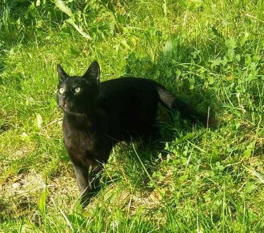 Sprzedam kocurka i kotkę rasy rosyjskiej czarnego