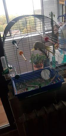 Продам папугу із кліткою