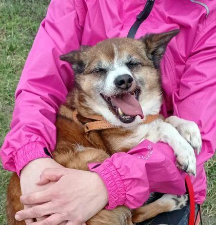 TUSIA przytulaśna psa babcia szuka domu i rąk do głaskania