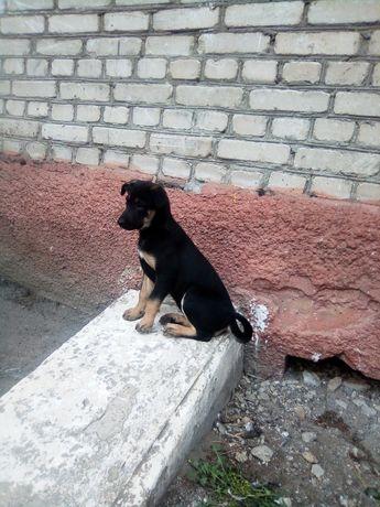 Щенки, подарю щенка, щенок ищет дом