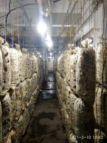 Продам готовый бизнес по выращиванию гриба Вешенка